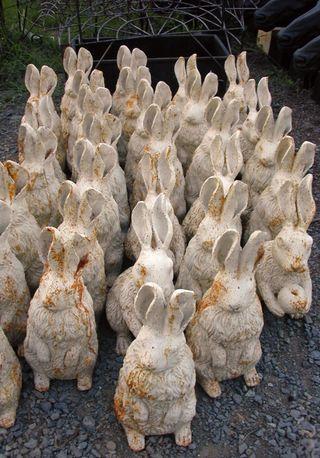 Scfiasco_bunny_bunnies_745196_h