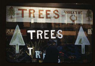 Trees-wreaths-christmas-439223-h